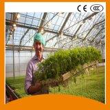 Qualitäts-Wasserkulturfilm-Gewächshaus-wachsendes System für Gemüse