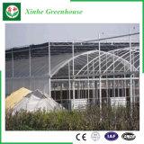 Chambre verte en plastique d'agriculture/film publicitaire/jardin avec le système de refroidissement