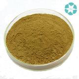Extrait de fenouil / Foeniculum Vulgare Extrait