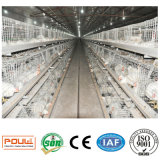 Le système de cage de poulet Equipement de poulet à fourchettes
