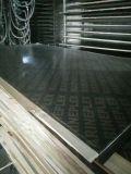 madera contrachapada Shuttering concreta de la base del álamo de la talla 3X6