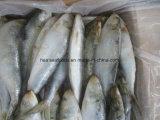 Peixes grandes da sardinha (sobre 60pieces por a caixa)