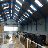 Prefabricados de acero de la ISO de la luz de bajo coste de construcción de la granja de vacas Edificio en venta