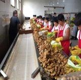 Haut de la qualité de graisses chinois de gingembre frais