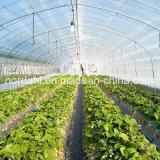 Película PE Farm de Estrutura de aço pré-fabricados com efeito de estufa para a venda de produtos hortícolas