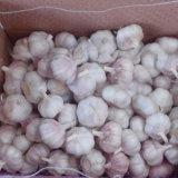 Китайский свежего чеснока, обычный белый, ослепительно белый
