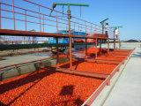 molho de pé do tomate do malote 1000-5000bph que faz máquinas