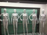 mannequin 고품질 플라스틱 숙녀