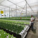De Hydrocultuur die van Nft Systeem voor Plantaardige Installatie kweken