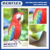 Impression jet d'encre Digital Print Sign Matériel d'affichage Affichage Print Textile