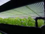 O diodo emissor de luz da economia de energia 80% cresce claro para vegetais de raizes