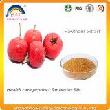Polvere dell'estratto delle bacche del cratego per il supplemento dietetico