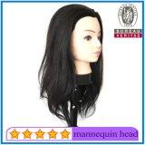 Menschenhaar-Mannequin-Kopf 100% für Training