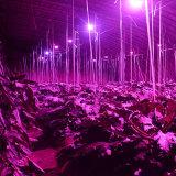 O diodo emissor de luz cresce a lâmpada com 10000 horas para plantas