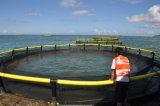 La cage de flottement de pisciculture pour l'aquiculture de flottement de mer