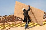 Größte Größe 1525mmx3050mmm oder der 6 ' x10 Aufbau-Film stellten Furnierholz gegenüber