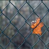 Rete fissa rivestita di collegamento Chain della rete metallica di obbligazione del tessuto del PVC