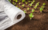 Tampa de fileira não tecida biodegradável para proteção contra frio e gelo