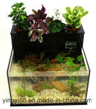 En acrylique de qualité Super réservoir de poissons pour la vente