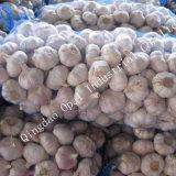 10kg 20kg sac Mesh normal frais ail blanc pur