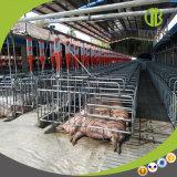 Le système alimentant automatique utilisé de ferme de porc vous attend