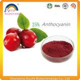 Polvere della spremuta di mirtillo con Proanthocyanidin
