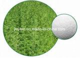 ArtemisiaのAnnuaの自然なエキスArtemisinin 98%、99%の抗マラリア薬