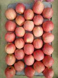 Apple 신선한 플라스틱 자루에 넣어진 분홍색 숙녀