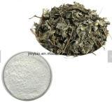 Extracto de té de vid Anti-Tumor Dihydromyricetin 20%-98%