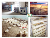 Edelstahl-Ente-Ei-Inkubator-automatisches Geflügel Egg Inkubator-Brutplatz