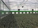 ライトは鉄骨構造のフレームによって組立て式に作られる構築の温室の重量を量る