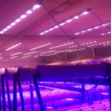 T8 LED Aluminiumkarosserien-materielle Pflanzenwachsende Lampe für Pflanze