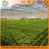 Folha de policarbonato material de policarbonato PC usado para efeito de estufa comercial de produtos hortícolas