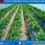 Niedrige Kosten-Film-landwirtschaftliches Gewächshaus in Polen für Tomate-Pfeffer