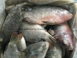 Saleのための凍結するFish Frozen Tilapia