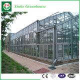 중국 제조자 농업을%s 자동 제어계 유리제 온실