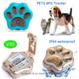 방수 IP66 (V30)를 가진 귀여운 애완 동물 GPS 추적자