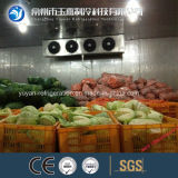 Quarto de armazenamento frio para o legume fresco