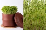Зеленый Mung Bean Moong фасоль mung Dal роста использовать для продажи