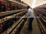 Automatisierter Geflügelfarm-Huhn-Rahmen (Geflügel-Gerät)