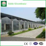 Serre de van uitstekende kwaliteit van het Blad Customizedpc met Hydroponic Systeem voor Verkoop