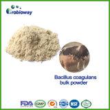 Ingrédients en bloc d'alimentation de sporogènes de lactobacille de Bacillus coagulans de Probiotics