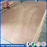 tarjeta Bintangor de madera/de la madera/de la madera de construcción del álamo de 12m m/madera contrachapada comercial antirresbaladiza de la chapa del pino/del abedul/del roble