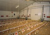 آليّة دجاجة مغذية ممونات