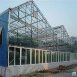 중국 공장에 의하여 직류 전기를 통하는 Hydroponic 유리제 온실