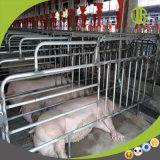 돼지 농장 이용한 자동적인 공급 시스템은 기다리고 있다