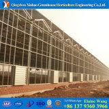 Дом Hysdroponic фабрики Китая стеклянная зеленая для томата