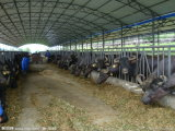 가금 집을%s 농업 가벼운 강철 조립식 가옥 또는 Prefabricated 외양간 또는 목장