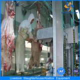Capra Slaughtering Equipment con Good Services