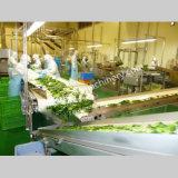Légume du SUS 304/machine à laver automatiques de raisins secs